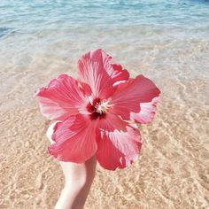Juste Parfait - Flowers and plants - Blumen Cute Wallpapers, Wallpaper Backgrounds, Beach Aesthetic, Summer Wallpaper, Tropical Vibes, Aesthetic Wallpapers, Summer Vibes, Summer Art, Beautiful Flowers
