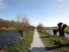Pollard-willows | Flickr - Photo Sharing!
