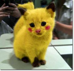 söta kattungar - Sök på Google
