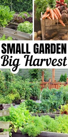 Small Vegetable Garden Ideas These small garden ideas will help y. - Small Vegetable Garden Ideas These small garden ideas will help you get the most bang for your vegetable gardening buck! Harvest fresh produce even from your urban garden. Small Vegetable Gardens, Vegetable Garden Design, Small Gardens, Outdoor Gardens, Vegetable Gardening, Veggie Gardens, Gardening Vegetables, Vegetable Garden Planning, Growing Vegetables