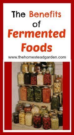 Learn the benefits of fermented foods and how to get inspired to make your own fermented foods in this post.