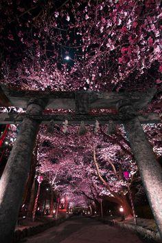 桜の門 | Nagasaki365 - 長崎の今を写真でお届けします。