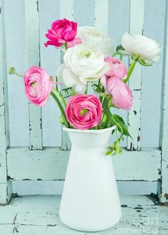size: Photographic Print: White and Pink Ranunculus Flowers by Anna-Mari West : Entertainment Pink Roses, Pink Flowers, Tea Roses, Exotic Flowers, Pink Peonies, Yellow Roses, Fresh Flowers, Home Design, Pink Flower Arrangements