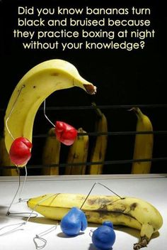 First Rule Of Bananaclub: You Do Not Talk About Bananaclub // funny pictures - funny photos - funny images - funny pics - funny quotes - #lol #humor #funnypictures