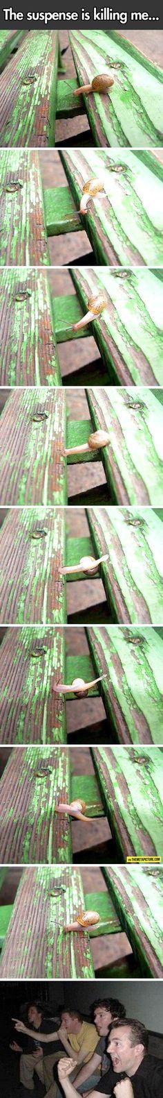 This Snail Loves Parkour