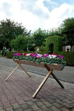 Terwolde decorated with cyclamen Super Serie