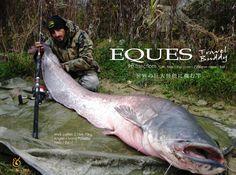 世界の巨大怪魚に挑む竿、ポールアンドラインエクエスでのヨーロッパオオナマズ釣り