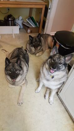 (Left to right) Mordred, Cerberus and Excalibur.