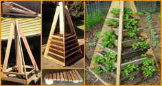 STAX | Így termessz epret, ha panelban laksz vagy csak kicsi a kerted
