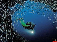Amazing HD man amoung thousand fish amazing hd wallpaper