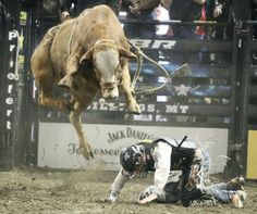 rodeo bulls | Bagging the big one: Meier notches Billings PBR win