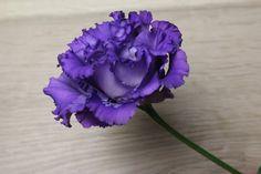 まずはこちら、トルコキキョウ。濃いめの紫がとてもきれいなお花です。