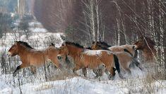 Un estudio reveló que los caballos salvajes se extinguieron hace siglos