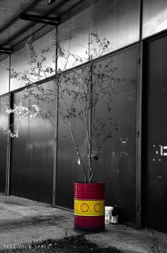 Take Your Space  - concept -  #oil #barrel #shell #industrial #tree #concrete #pollution #colored #art #love