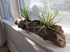 Airplants - check reptile accessories in pet shops for branches & such.