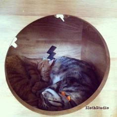 """:""""Have you visit Cat Cafe Neko no Niwa in Singapore yet? There are 13 friendly cats waiting for you to visit them :) """"  www.facebook.com/SlothStudio"""