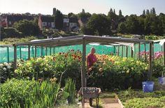 dahlia heaven garden (25 varieties)   birmingham, england
