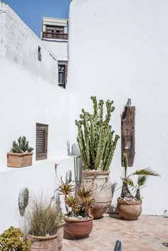 These beautiful images shot by photographer & stylist Paulina Arcklin feature 5 Columns Riad. This stunning 200 year old house is located in the old medina of Essaouira, a coastal town in Morocco. Garden Deco, Balcony Garden, Garden Hose, Landscape Design, Garden Design, Mediterranean Plants, Spanish Garden, Open House Plans, Diy Terrasse