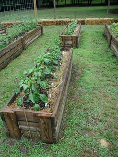 strawbale gardening - neater than other strawbale gardens I've seen...kind of a cross between straw bale and permanent/traditional raised beds