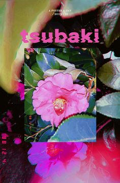 y Color Saturation Tsubaki Flower Street Photography Camellias ? Graphic Design Posters, Graphic Design Inspiration, Graphic Art, Flower Graphic, Gfx Design, Font Design, Magazin Design, Poster Art, Grafik Design