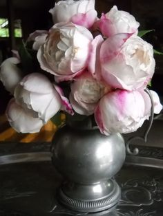 Mme. Pierre Oger - Bourbon class - 1878 - One of the prettiest roses, shown off well here in pewter