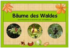 """Sachunterricht in der Grundschule: Wissenskartei """"Bäume des Waldes"""""""