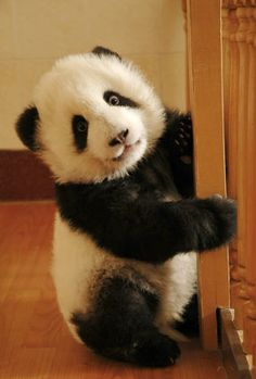 Baby Panda! I remember my stuffed panda bear toy from childhood..This one is super cute..