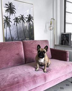 Diesem pinken Samt-Sofa kann einfach keiner widerstehen! // Velvet Trend Couch Wohnzimmer Sofa rosa pink @aylin_koenig