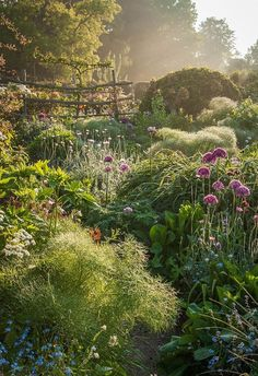 images capture nature's gardens Garden in East Sussex, England. Check out the 2018 International Garden Photographer of the Year winners.Garden in East Sussex, England. Check out the 2018 International Garden Photographer of the Year winners. Beautiful Gardens, Beautiful Flowers, Beautiful Places, Magical Gardens, Beautiful Pictures, Amazing Gardens, Beautiful Landscapes, East Sussex, Nature Aesthetic