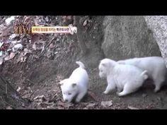 수락산 곰순이, 산 정상 맴도는 '사연' @TV 동물농장 0103 - YouTube