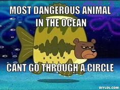 seabear spongebob   How Draw Perfect Circle Spongebob Logic Pictures