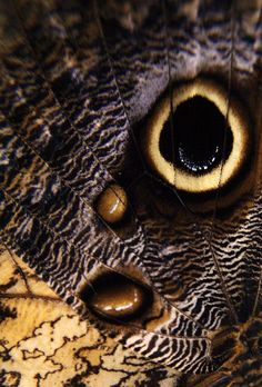 close up of a moth wing Moth Wings, Insect Wings, Close Up Pictures, Nature Pictures, Patterns In Nature, Textures Patterns, Natural Form Art, Moth Caterpillar, Fotografia Macro