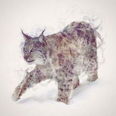 Soft and delicate double exposure portraits of wild animals | Creative Boom