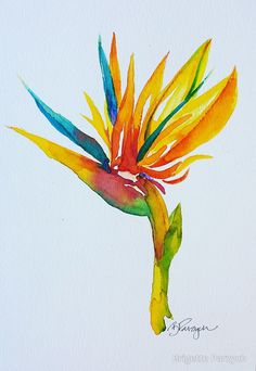 Bird of Paradise - #watercolor