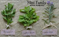 Herbal remedies using mint and identification, peppermint to rid mice, lavender for psoriasis, etc.
