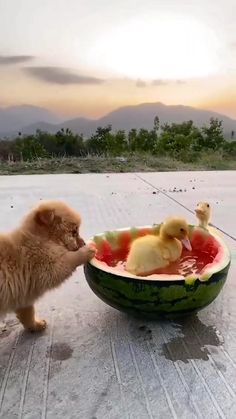 Super Cute Puppies, Baby Animals Super Cute, Cute Baby Dogs, Cute Dogs And Puppies, Cute Little Animals, Cute Funny Animals, Funny Dogs, Amazing Animal Pictures, Baby Animals Pictures