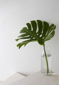 To Decorate With Modern And Tropical Statement Leaves Monstera Deco Floral, Arte Floral, Decoration Plante, Plants Are Friends, Tropical Leaves, Tropical Plants, Green Plants, Green Fruit, Ikebana
