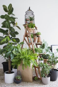 Indoor plants: create your own indoor garden | Marie Claire