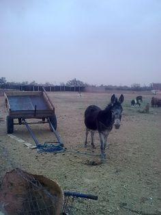 صديق  ليبيا قبل النفط
