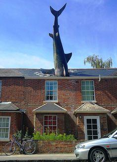 The Shark, Oxford, UK   Image credits: artmoscow.wordpress.com