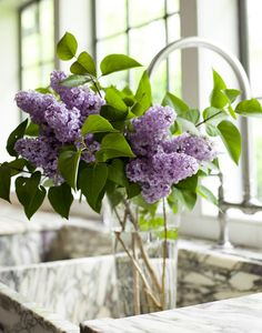 lilacs - will always remind me of Grandma and Grandpa's yard when I was little <3