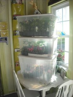Gardeners turn to mini greenhouse gardening when they need to create a specific microclimate or lack space for a larger. the Mini greenhouse can be used for protected crops such as tomatoes, peppers, cucumbers and aubergines. Greenhouse Kits For Sale, Indoor Greenhouse, Greenhouse Plans, Greenhouse Gardening, Container Gardening, Portable Greenhouse, Diy Small Greenhouse, Pallet Greenhouse, Winter Greenhouse