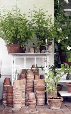 geranium and terracota pot collection Potting Sheds, Potting Benches, Terracota, Terracotta Pots, Garden Care, Clay Pots, Dream Garden, Garden Pots, Backyards