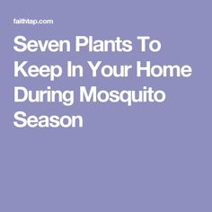 Seven Plants To Keep In Your Home During Mosquito Season