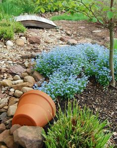 35 Best Spilled Flower Pot Ideas To Brighten Your Yard With Style Blue Flowers In A Dry Creek Bed