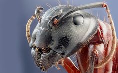 Insect head close-up wallpaper