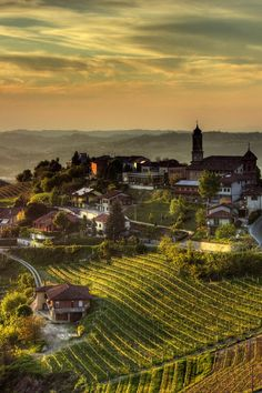 Vineyards, Treiso, Italy, by Pier Giorgio Franco, on 500px.(Trimming)