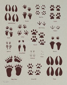 Animal Tracks Screen Print Poster by dogfishmedia on Etsy Woodland Baby, Woodland Animals, Woodland Creatures Nursery, Screen Print Poster, Poster Prints, Linocut Prints, North American Animals, Animal Footprints, Animal Tracks
