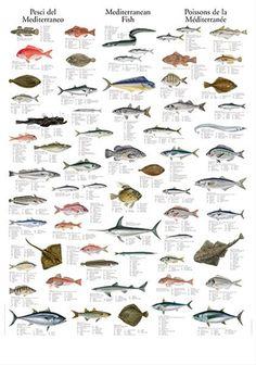 Mediterranean Fish