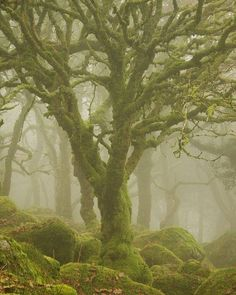 Trees in the mist, Dartmoor National Park, England by Duncan George